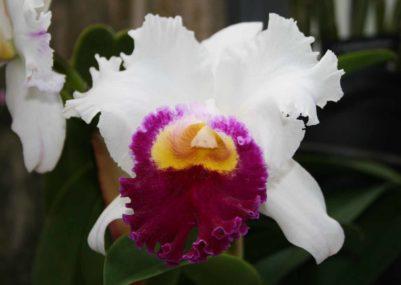 flower-4358854-1500x1060